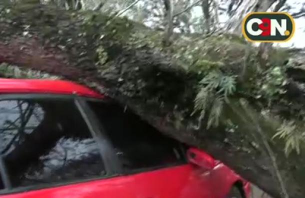 Enorme árbol cayó sobre un vehículo en Hernandarias